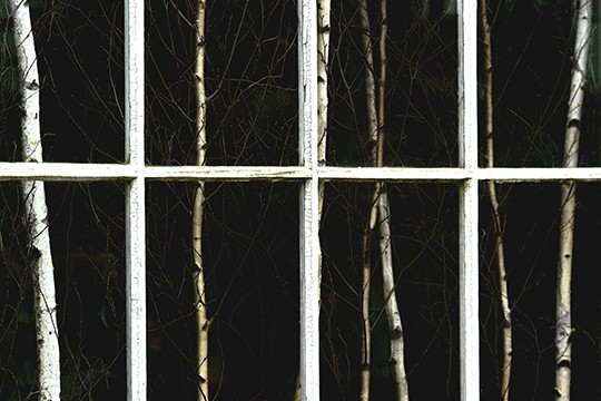 Window Trees by Jerry Novesky